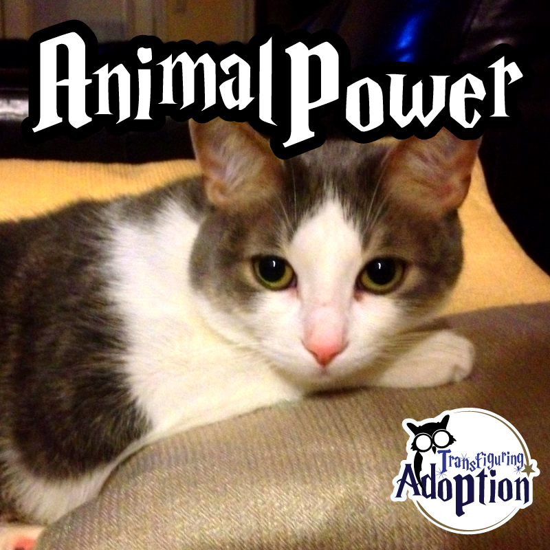 animal-power-cat-adoption-gryffindor-kitten