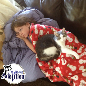 tennessee-kingston-home-adoption-inside-cat