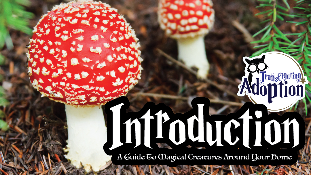 introduction-guide-magical-creatures-around-your-home-facebook