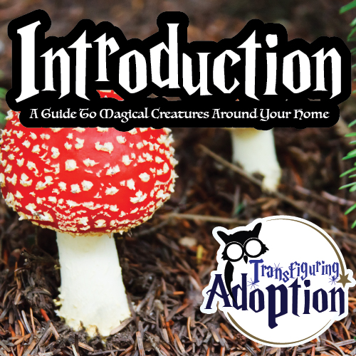 introduction-guide-magical-creatures-around-your-home-pinterest