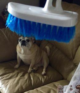 dog-Transfiguring-adoption