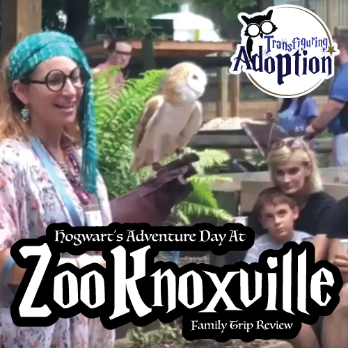 hogwarts-adventure-day-zoo-knoxville-transfiguring-adoption-square