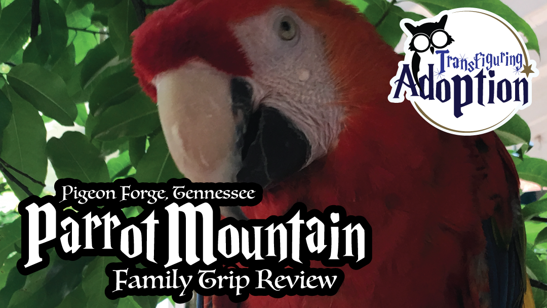 parrot-mountain-pigeon-forge-tennessee-trip-review-rectangle