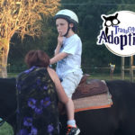 transfiguring-adoption-equine-therapy