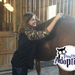 transfiguring-adoption-horse-grooming